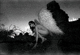 Vikram  Bawa-Flight from The Fallen Angel Series