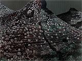 Substances of Earth - Image I - Rajan  Krishnan - Winter Auction 2009