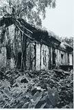Abandoned House, Parra - Prabuddha  Dasgupta - 24-Hour Online Absolute Auction: Editions