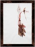 Untitled (hanging flayed arm) - Mithu  Sen - Kochi Muziris Biennale Fundraiser Auction | Mumbai, Live