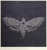 Process (Hawkmoth) - Baiju  Parthan - Art Rises for Kerala Live Fundraiser Auction