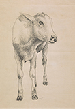 Untitled - Manjit  Bawa - Spring Online Auction