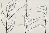 Untitled - Zarina  Hashmi - Winter Online Auction