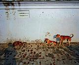 Sunil  Gupta-Untitled 18
