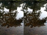 Atul  Bhalla-The Pond - III